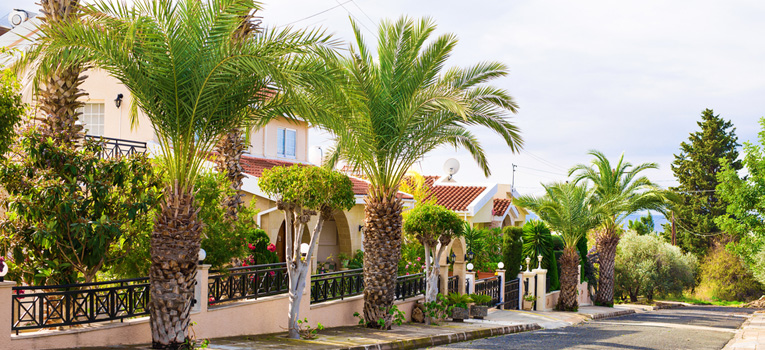 Street in cyprus lined with palm trees and properties