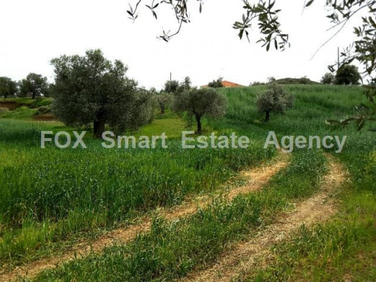Agricultural Land in Anglisides, Larnaca 3