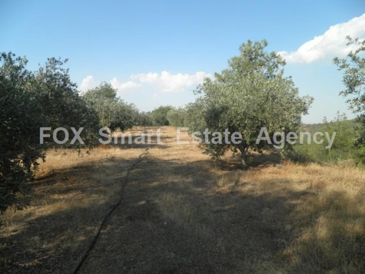 Agricultural Land in Kampia, Nicosia 7