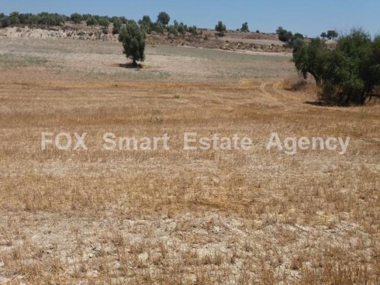 Agricultural Land in Anglisides, Larnaca 10