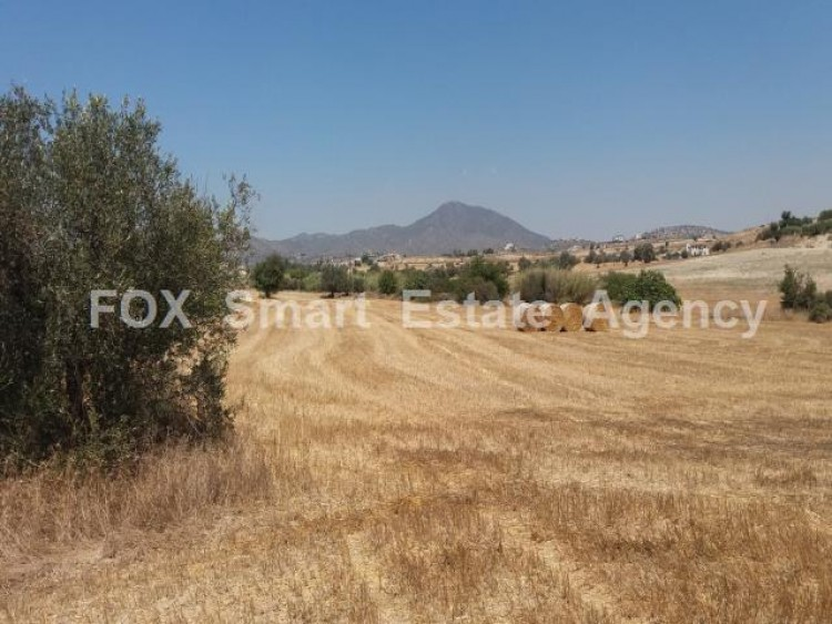 Agricultural Land in Anglisides, Larnaca 14