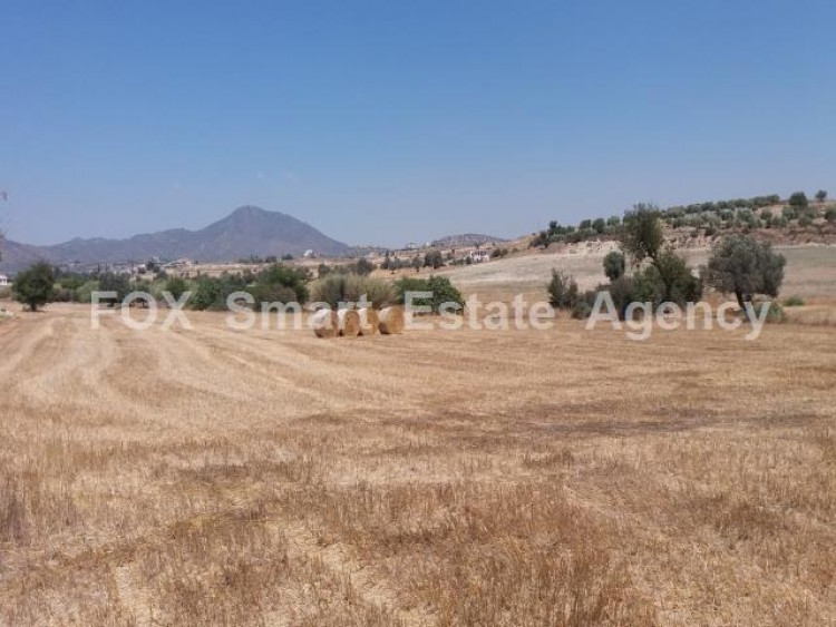 Agricultural Land in Anglisides, Larnaca 15