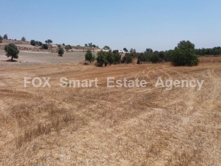 Agricultural Land in Anglisides, Larnaca 8