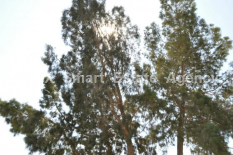 For Sale 3 Bedroom Detached House in Potamos liopetriou, Famagusta 31